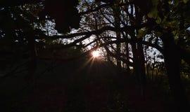 Sun con la trenza, primero plano oscuro con la sol brillante, foto admitida el Reino Unido fotos de archivo libres de regalías