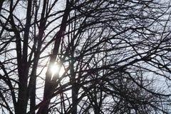 Sun contra as árvores fotografia de stock