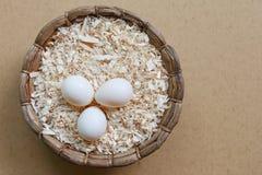 Sun conure bird eggs Royalty Free Stock Image