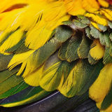 Sun Conure feathers Stock Photography