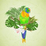 Sun Conure Parrot tropical bird standing on a branch white orchid Phalaenopsis on a white background vector illustration editab. Le hand draw royalty free illustration