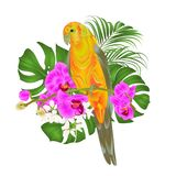 Sun Conure Parrot tropical bird standing on a purple orchid Phalaenopsis and palm, phiodendronon a white background vector illust Stock Photos