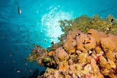 Sun in the coral garden stock photos