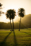 Sun covered by three palm trees Royalty Free Stock Image