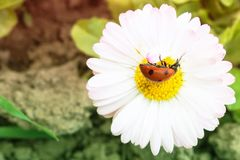 Beautiful flower and insect. The sun crawls on the flower. Beautiful flower and insect stock images