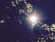 Sun da noite Imagens de Stock Royalty Free