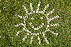 Sun of Daisy flowers. In a green field Stock Photos