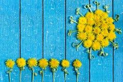 Sun of dandelion and flowers Stock Photos