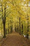 Sun dans la forêt d'automne Photographie stock libre de droits