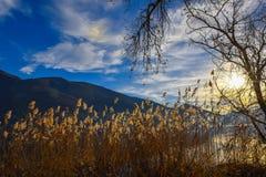 Sun dans le marais Photographie stock libre de droits