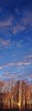 Sun dans le panorama givré de verticale d'arbres Photos libres de droits