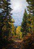 The Sun dans les arbres Images libres de droits