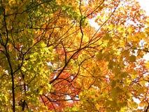 Sun dans les feuilles d'automne Photo stock