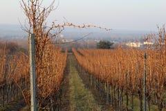 Sun dans les vignes photo libre de droits