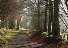 Sun dappled path Royalty Free Stock Images