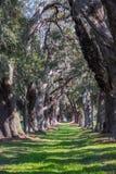 Sun Dappled Path Through Oak Trees Stock Images
