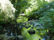 Sun Dappled Stream Stock Photos