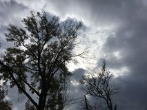 Sun through dark gray cloudy sky. Trees. Vladivostok nature, early autumn Stock Images