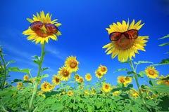 The Sun das flores com óculos de sol Imagem de Stock Royalty Free
