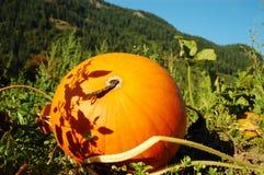 Sun decorated pumpkin Stock Photos