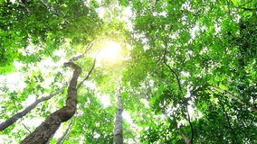 Sun in deep jungle forest. HD. 1920x1080 stock footage