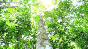 Sun in deep jungle forest. HD. 1920x1080. Sun in deep jungle forest. 1920x1080 stock footage