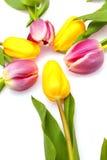 Sun dei tulipani Immagine Stock