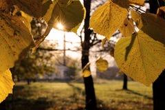 Sun in den Blättern Stockfotos