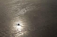 Sun, der über Sandfalten nachdenkt Lizenzfreies Stockbild