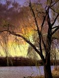 Sun, der über weinende Willow Tree einstellt stockfotos