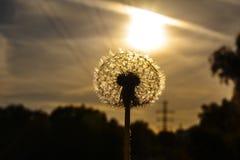 Sun, der aus dem Boden heraus steigt lizenzfreie stockfotos