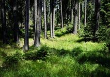Sun, der den Rand des Waldes erhellt lizenzfreie stockfotografie