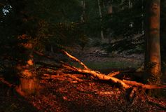 Sun, der den Wald rot beleuchtet lizenzfreie stockbilder