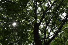 Sun, der durch Bäume mit kleinem Blendenfleck scheint Lizenzfreies Stockfoto