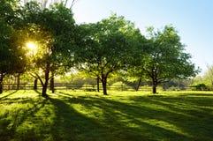 Sun, der durch Bäume scheint Lizenzfreie Stockfotografie