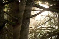 Sun, der durch Bäume scheint Lizenzfreie Stockfotos