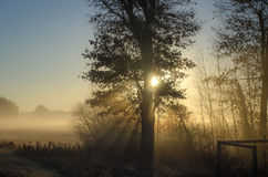 Sun, der durch Blätter auf einem nebeligen Morgen scheint stockbilder
