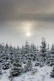 Sun, der durch dünne Wolke auf schneebedeckte Bäume scheint Lizenzfreie Stockbilder