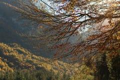 Sun, der durch den Herbst forrest mit einem See scheint Stockbilder