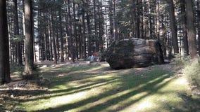 Sun, der durch Deodar-Bäume lugt Lizenzfreies Stockfoto