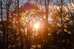 Sun, der durch die Bäume an einem sonnigen Falltag scheint Stockfotos