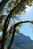 Sun, der durch die Bäume emporragt Lizenzfreies Stockfoto