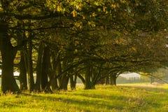 Sun, der durch die Bäume scheint Lizenzfreie Stockfotos
