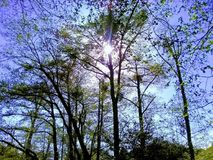 Sun, der durch die Bäume scheint stockfoto