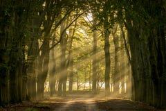 Sun, der durch die Bäume scheint stockfotografie
