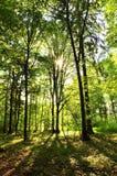 Schöner grüner Wald Lizenzfreie Stockfotografie