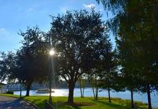 Sun, der durch die Bäume zu Beginn des Sonnenuntergangs mit schönem Buchthintergrund an LAK späht stockbild