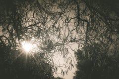 Sun, der durch die Baumaste scheint Stockfotografie