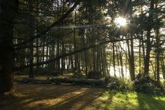 Sun, der durch die Herbstbäume scheint lizenzfreies stockbild