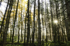 Sun, der durch die Herbstbäume scheint lizenzfreie stockbilder